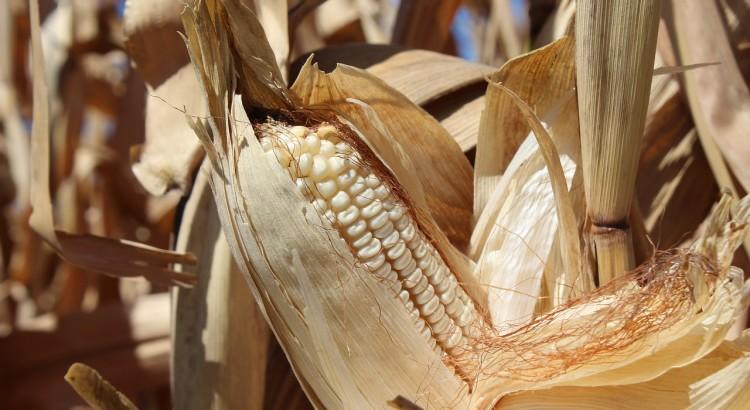 blog_safemed_sst_segurança_agricultura_normas_trabalhadores
