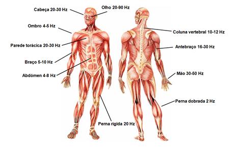 frequências do corpo humano